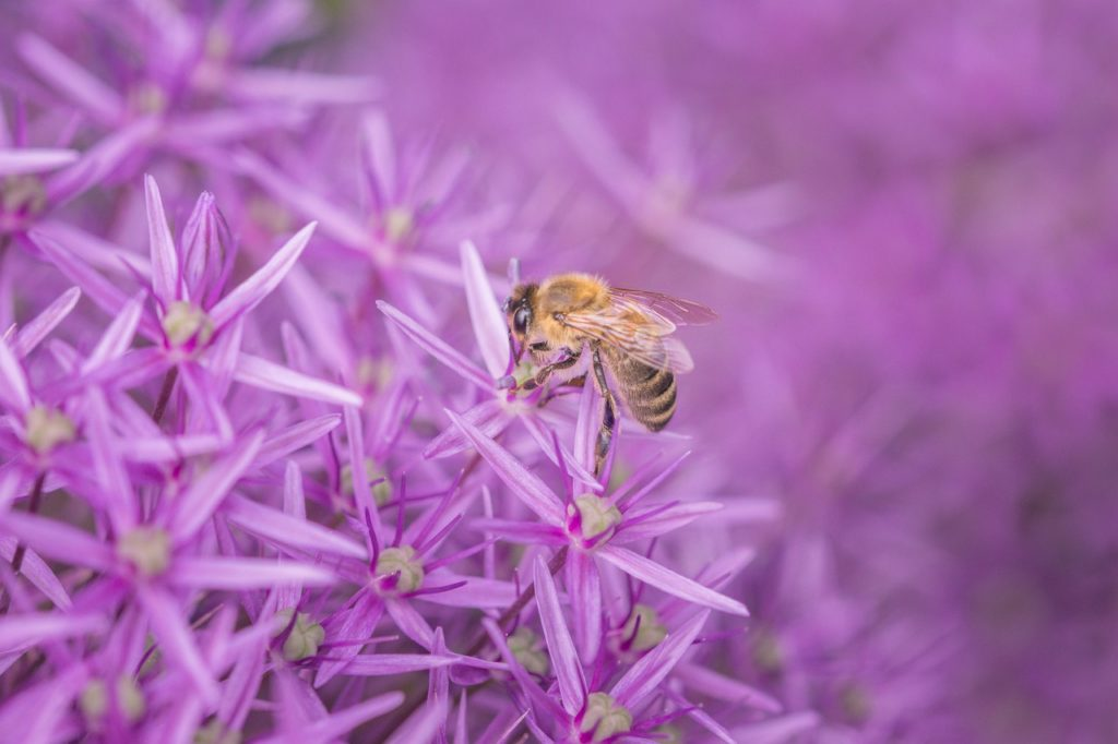 Bee on Flower | Ford Protecting the Environment | Tropical Ford Blog | Orlando, FL